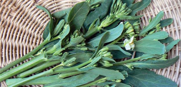 verduras asiáticas kailaan