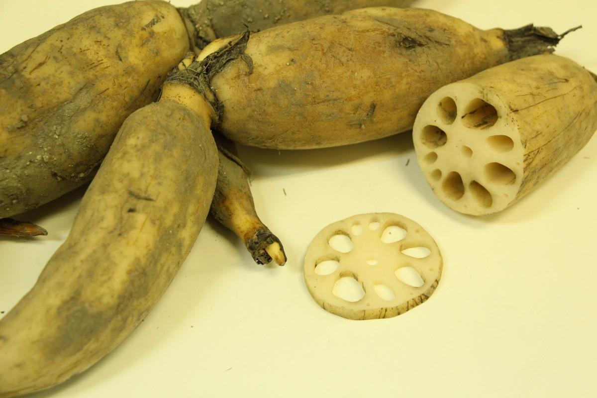 verduras asiáticas raíz de loto